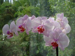 orkidenin anlamı