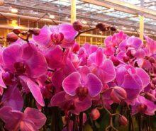 orkide vitamin besini