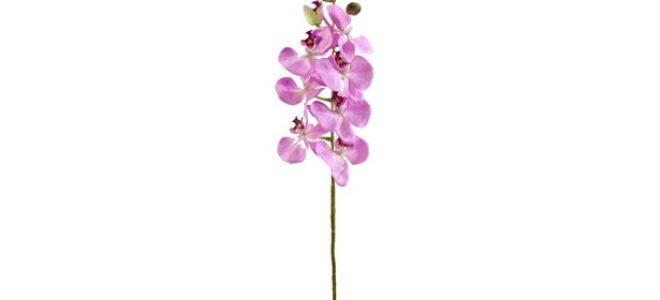 orkide nasıl patlar