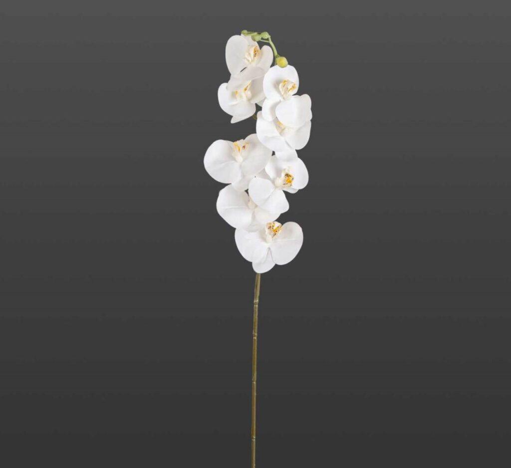 orkide çiçek nasıl çıkar