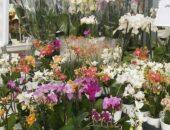 çiçek açan orkide