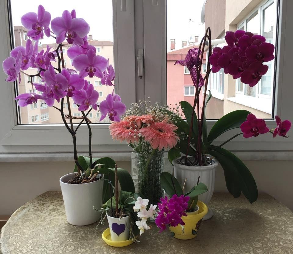 orkide nasıl çiçek açtırılır