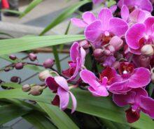 orkide vitamini türü