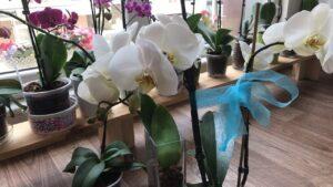 orkide vitamini evde yap