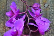 orkide çiçeği nasıl yetişir?