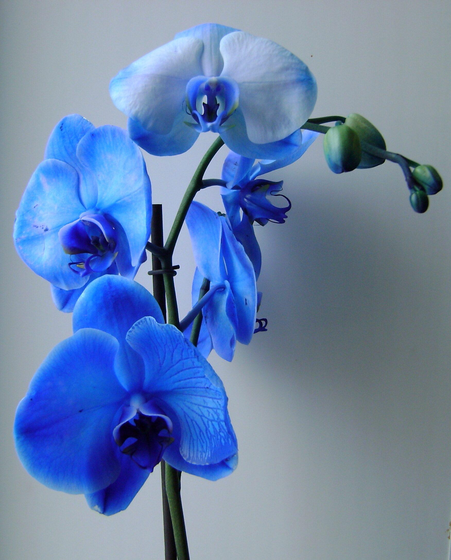 Orkideler güneşi sever mi?