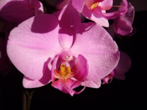 orkideler nerede yetişir?